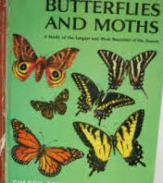 Golden Book of Knowledge_Butterflies and Moths