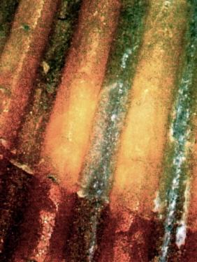 Pic0005_1