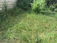 13609 Durkee Avenue - back lawn!