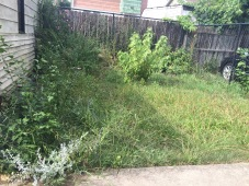 13609 Durkee Avenue - back lawn!
