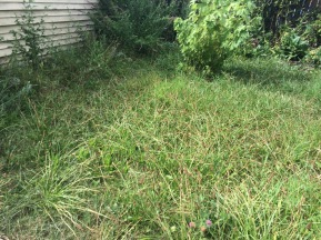 the lawn that should be cut