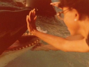 Thylias touching Dolphin at Sea World