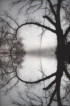 Double Tree (Invisible Coastline