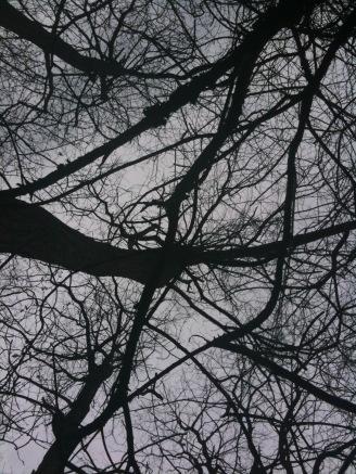 TREE FORKS